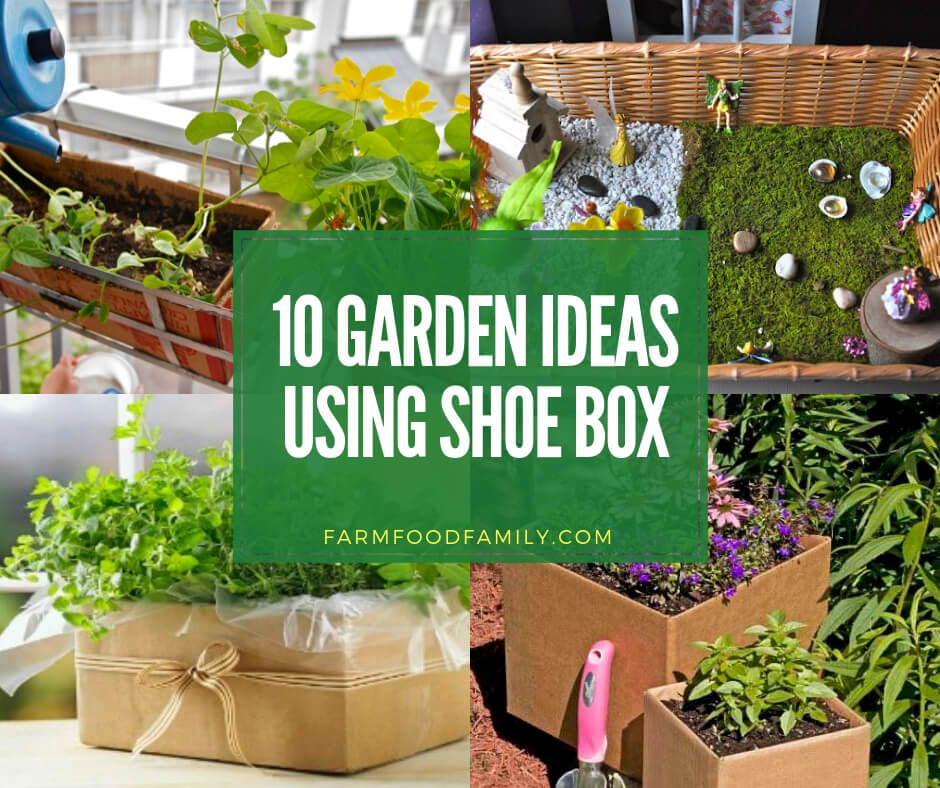 30 Shoe Box Craft Ideas: 10+ Best Repurposed Garden Ideas Using Shoe Box