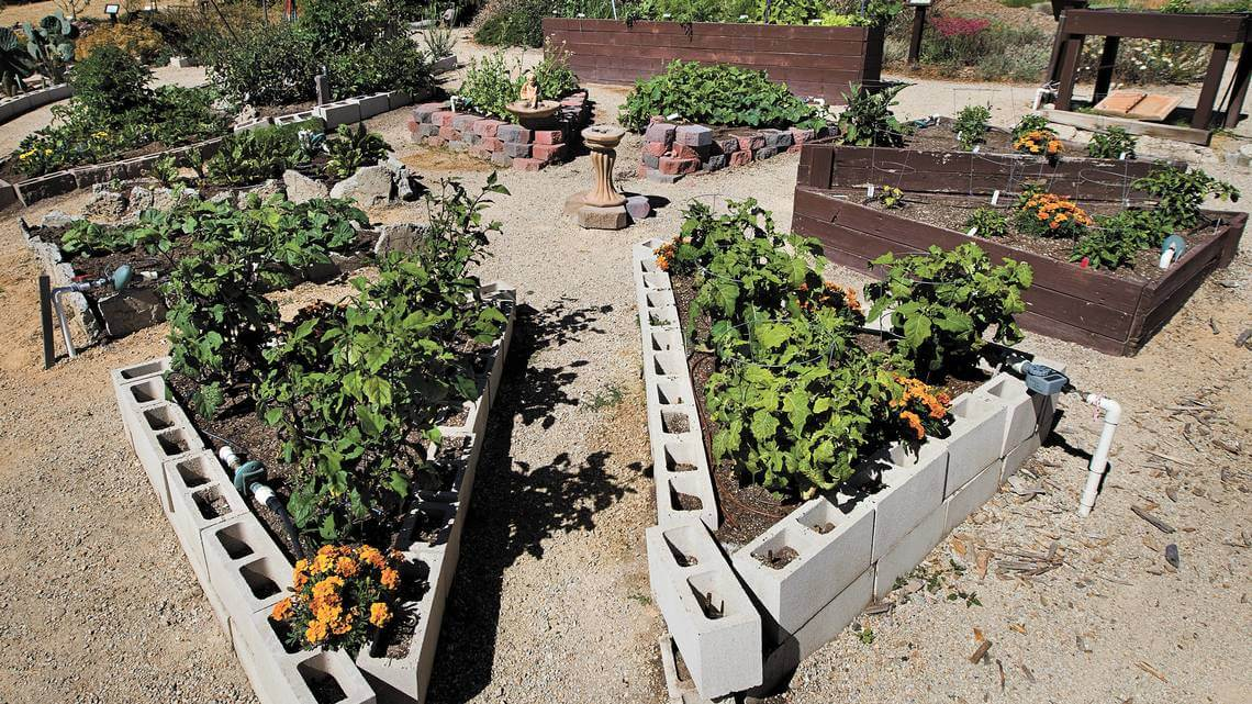 Concrete block raised bed with eggplants and marigolds