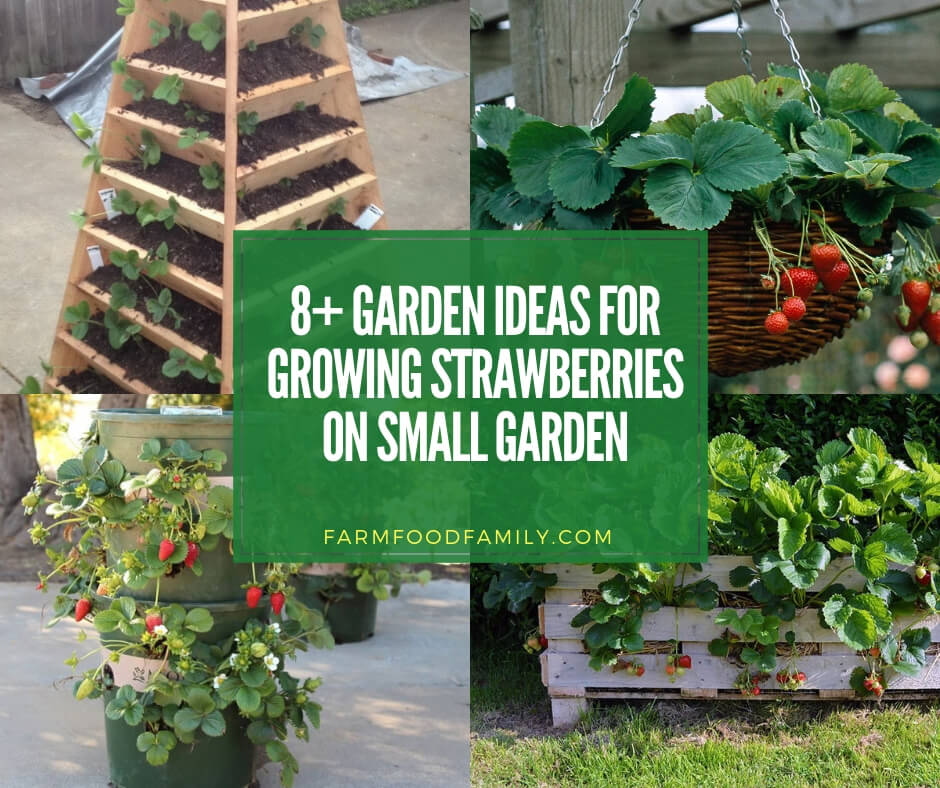 best diy ideas for growing strawberries on small garden