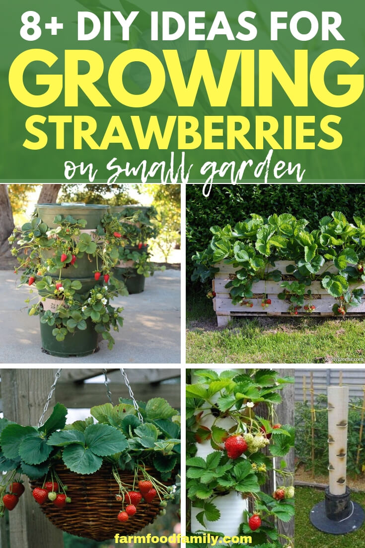 Creative DIY Ideas for growing strawberries on small garden (little or no space)