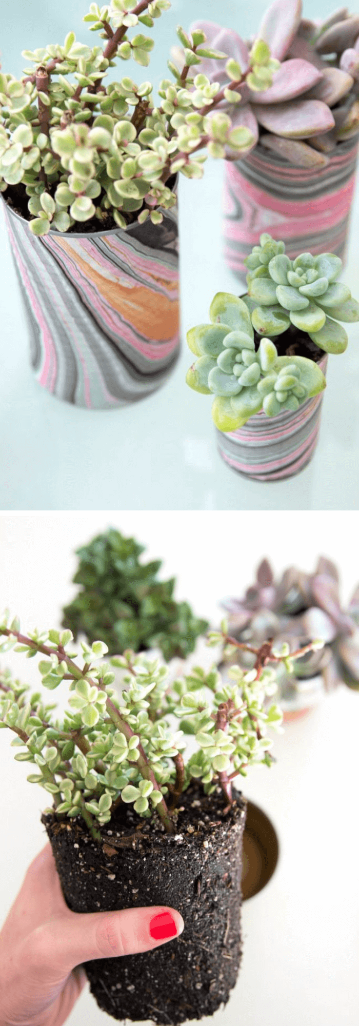 Succulents in tin can planters