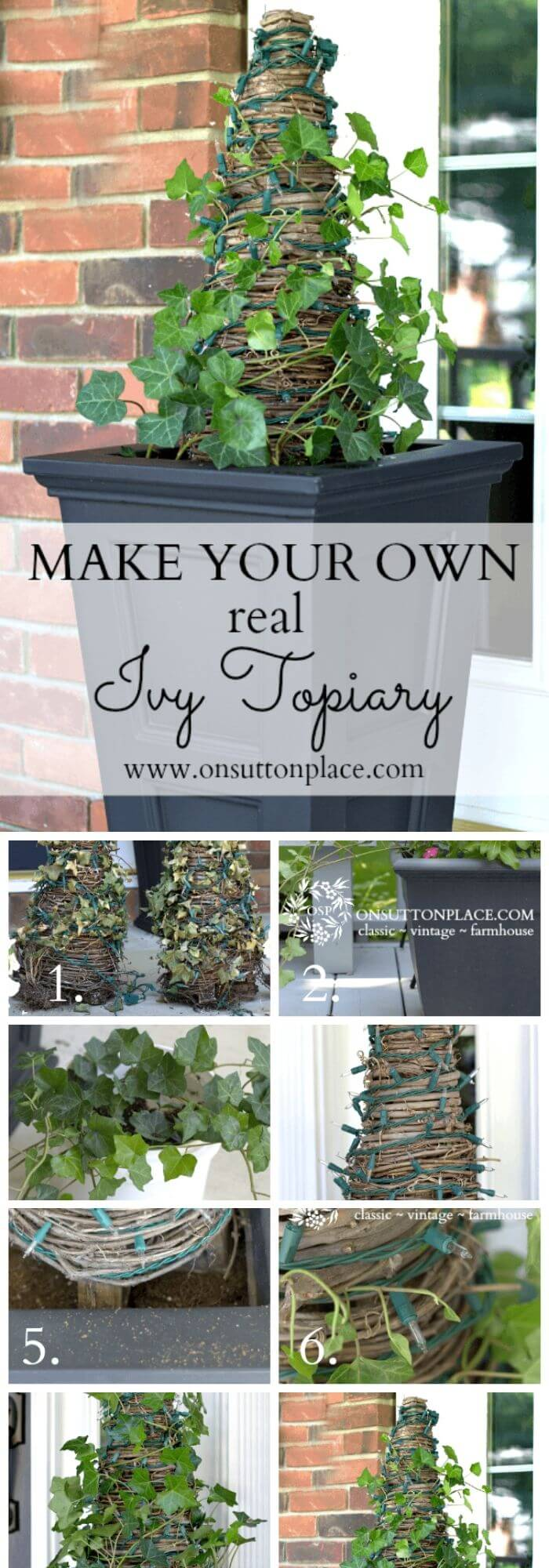 how to make a topiary tree in pot for beginners Make a Real Ivy Topiary