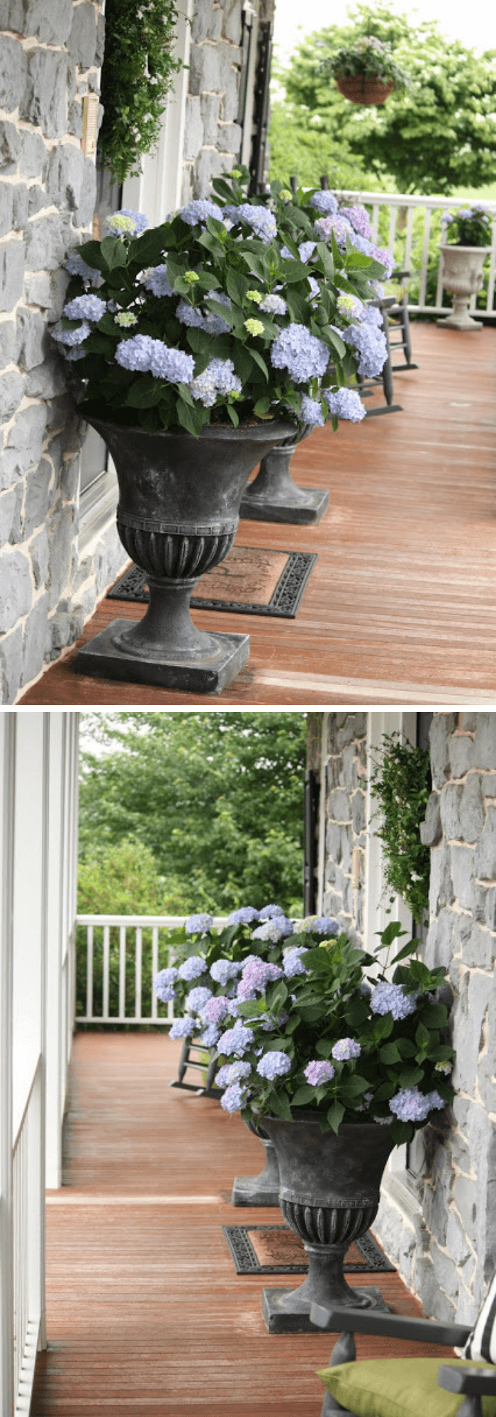The urns of hydrangeas