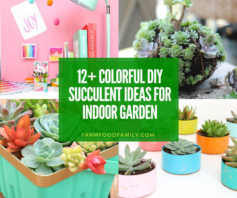 12+ Colorful Succulent Container Garden Ideas For Your