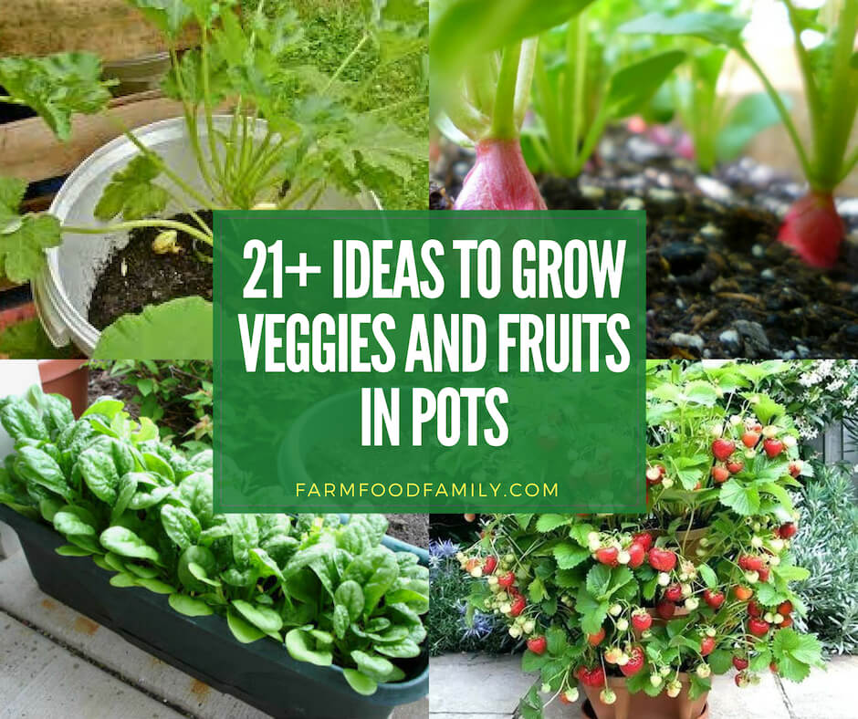 21+ ideas to grow veggies and fruits in pots