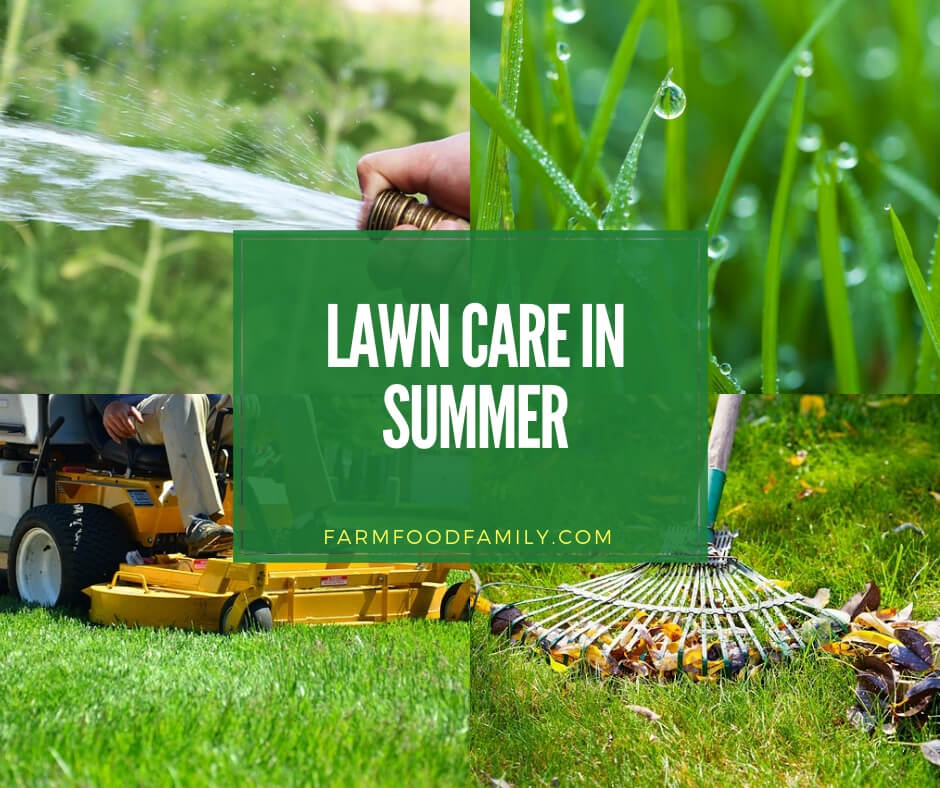 care for lawn in summer
