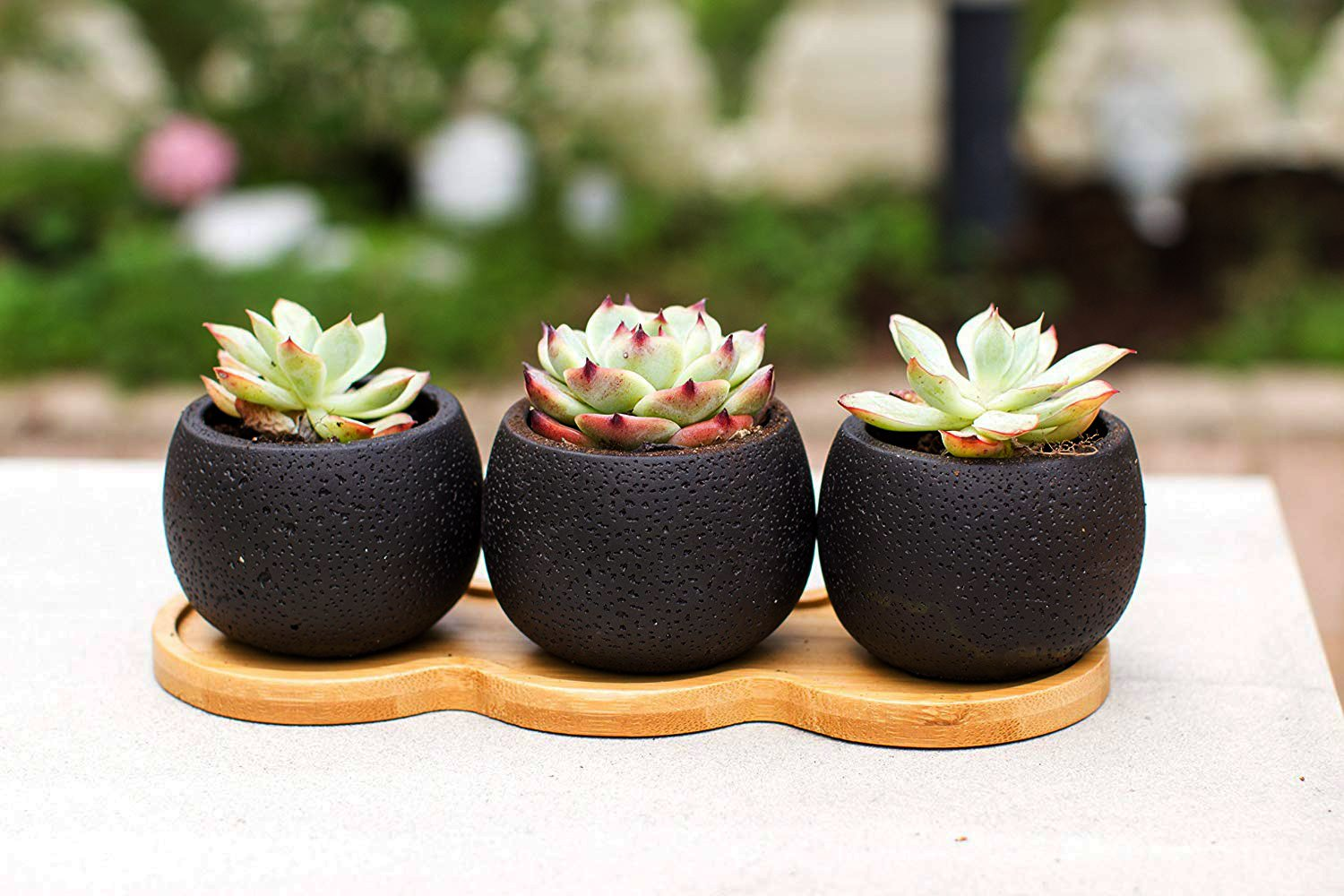 Small black pots with succulents on a wooden stand