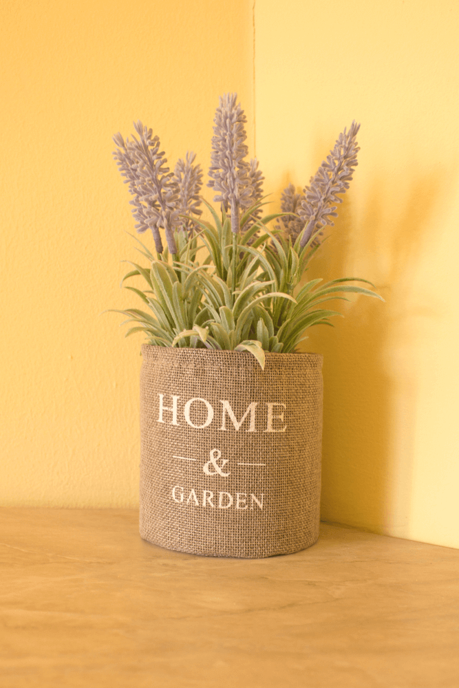 Lavender: 10 Plants That Repel Flies Naturally and Keep the Home Bug-Free