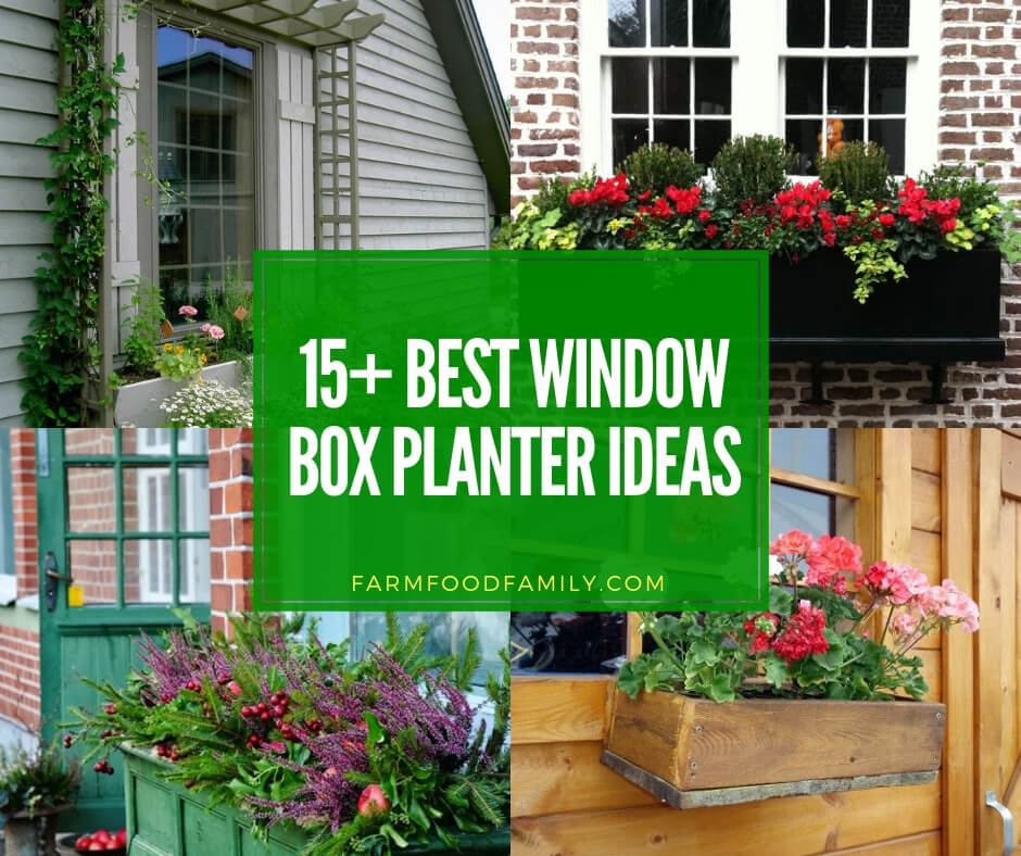 best window box planter ideas