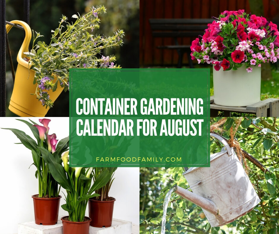 Container gardening calendar for August