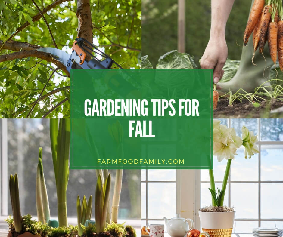 Tips For Preparing The Yard And Garden For Fall