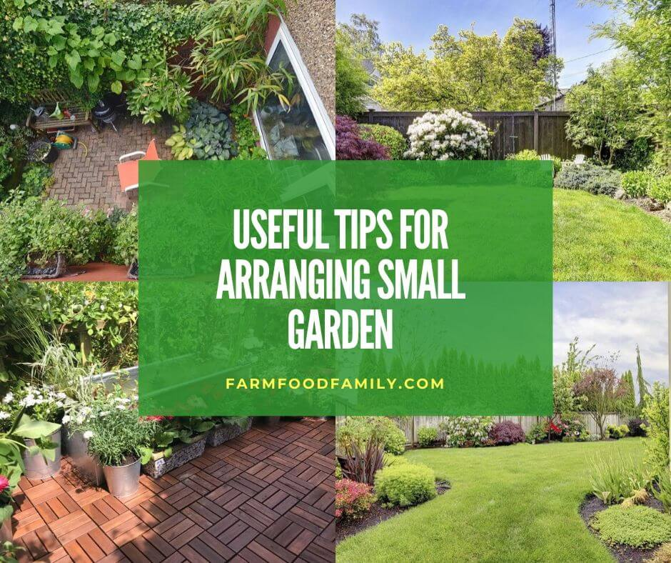 8 Useful Tips For Arranging Small Garden Plants Trees And