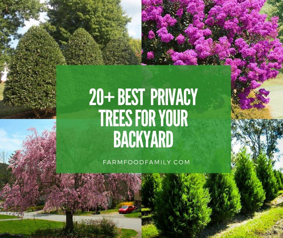 20 Best Plants To Grow For Backyard Privacy Farmfoodfamily