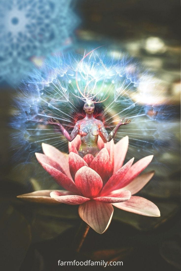 Lotus flower meaning in Meditation, Yoga