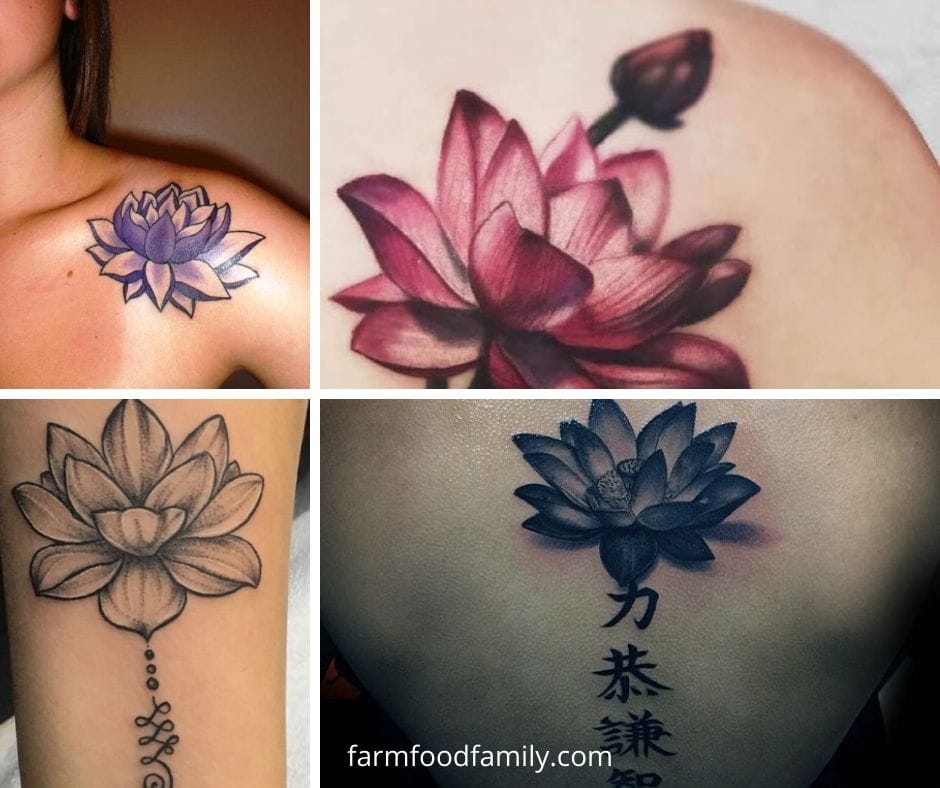 Lotus flower tattoo meaning