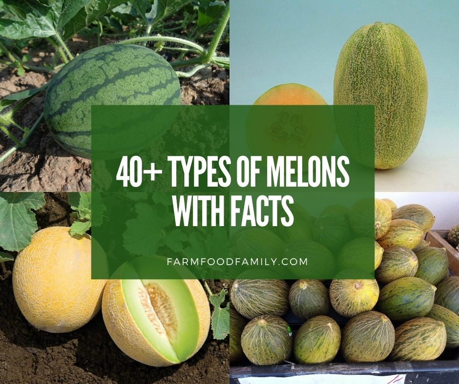 Melon dating site.