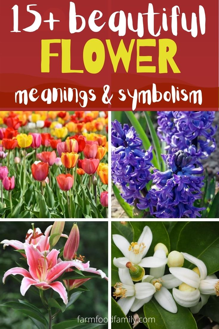 Beautiful flower meanings & symbolism