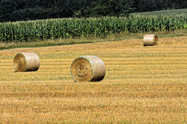 What is hay?