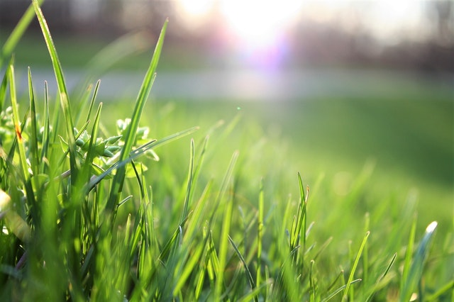 Why Is Aerating Your Lawn Important?