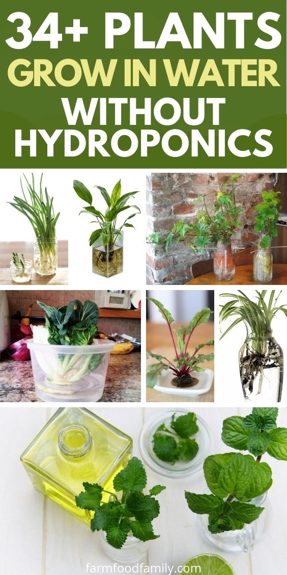 best plants that grow in water for indoors and outside