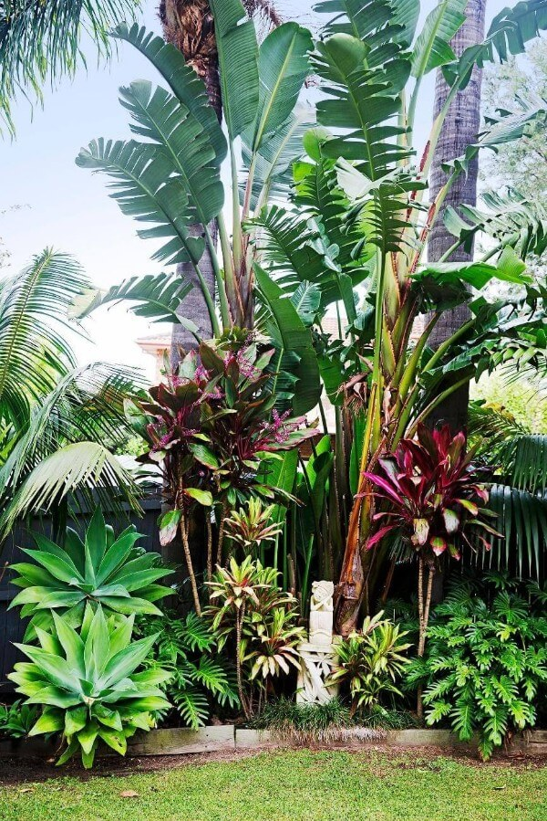 Do Have Different Types of Tropical Plants