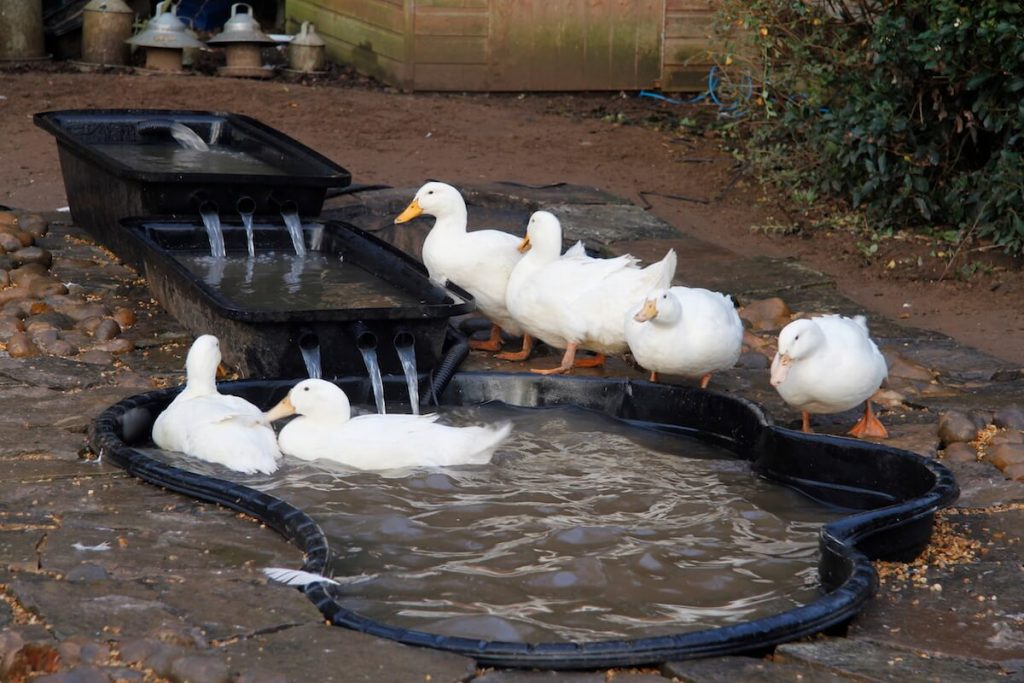 Create a Simple Waterfall Duck Pond