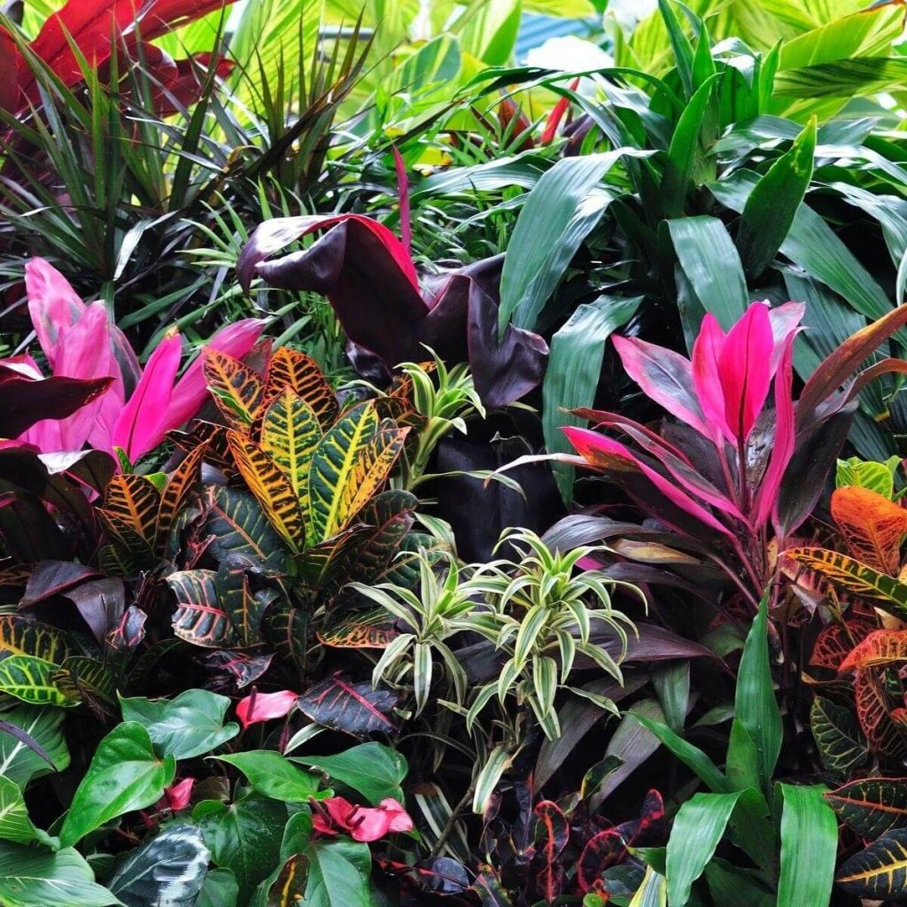 Add Foliage with Great Colors
